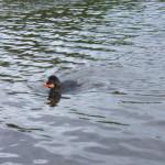 Taylas first swim