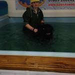 Angus Swimming
