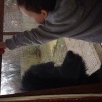 Callum and Angus fixing windows